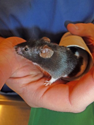 Beim hamster schauen - 4 9