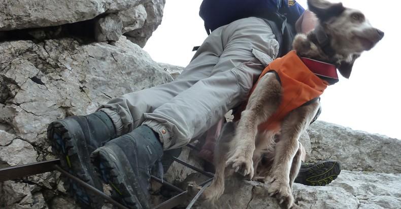 Klettergurt Für Hunde : Die callas auf reisen tierklinik schwanenstadt